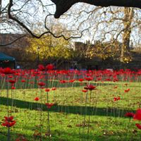 Picture of the Somerset poppy display